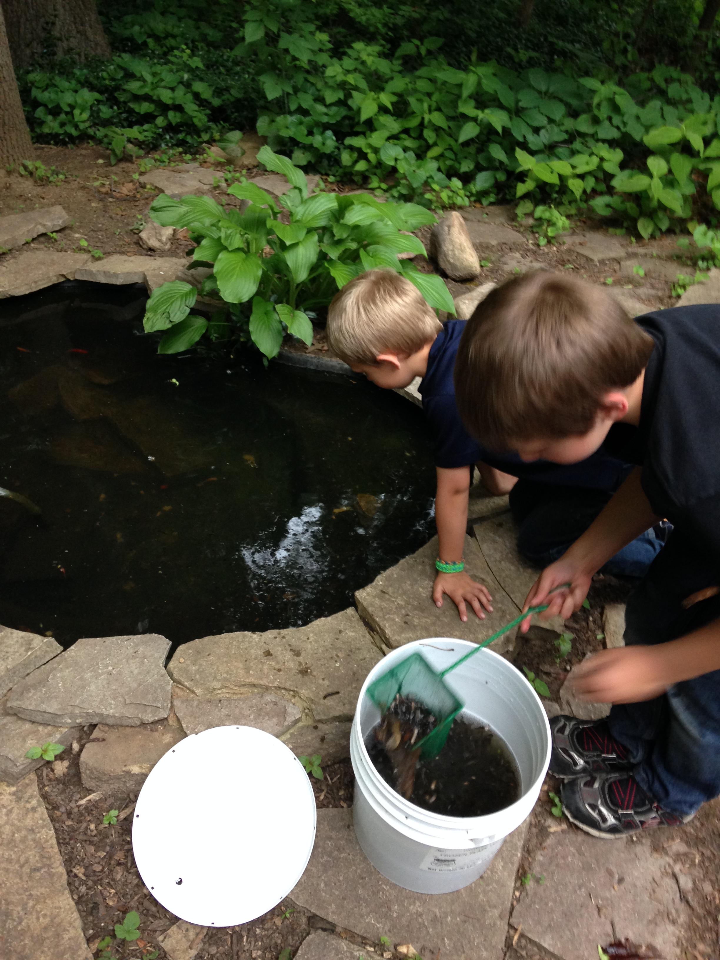peek in a pond for tadpoles u2013 52 things outside